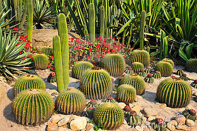The World of Cactus