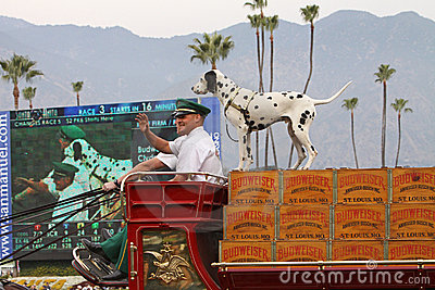 World-Famous Budweiser Clydesdale Beer Wagon Editorial Photography