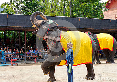 World famous elephant show in Nong Nooch tropical garden in Pattaya, Thailand. Editorial Stock Image
