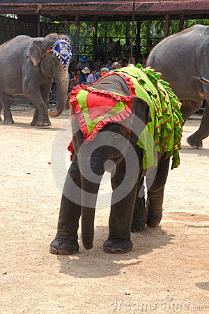 World famous elephant show in Nong Nooch tropical garden in Pattaya, Thailand. Editorial Image