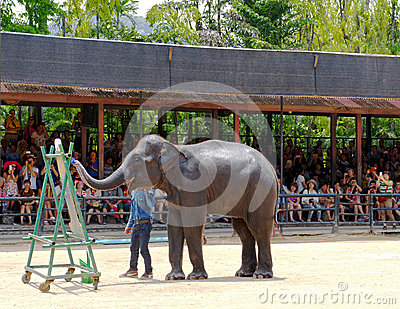 World famous elephant show in Nong Nooch tropical garden in Pattaya, Thailand. Editorial Stock Photo