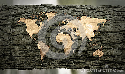 World map carved in tree bark