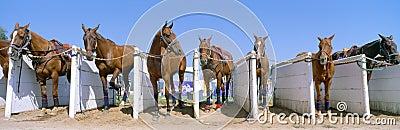 World Polo Championship Editorial Photography