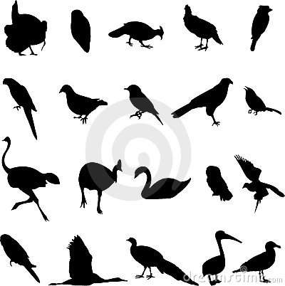 Free World-renowned Bird Royalty Free Stock Photo - 9441415