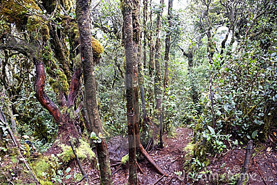 World s Oldest Mossy Forest