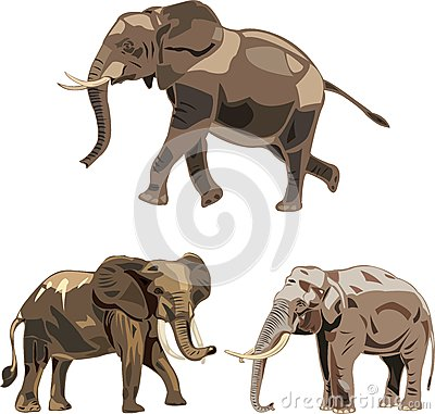 The world s three kinds of elephants