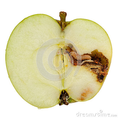 Free Worm Eating Apple  On White Background Stock Photography - 45881792