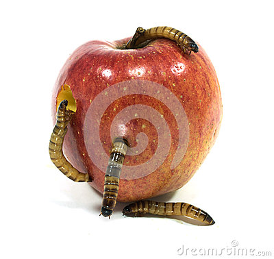 Free Worm Is Coming Out Of Bitten Apple Stock Photography - 34426402