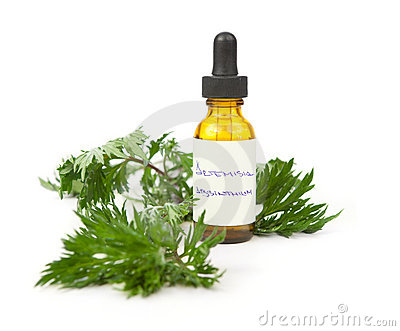 Wormwood herbal tincture or oil