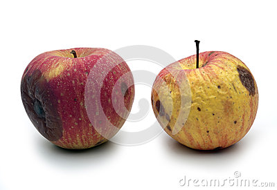 Wormy apples