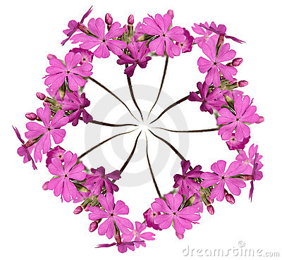 Wreath out of pink primula