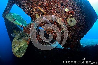 Wreck Hilma Bonaire