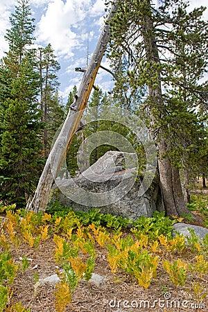 Wrights Lake wilderness