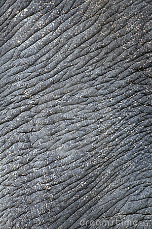Free Wrinkled Elephant Skin Royalty Free Stock Photos - 6096368