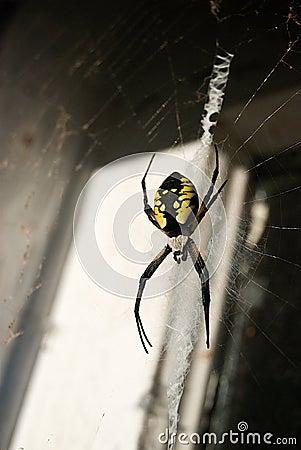 Writing Spider In Old Doorway