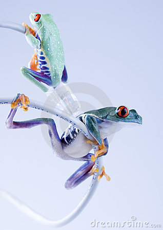 Free WWW Frog Royalty Free Stock Images - 1946399