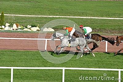 Wyścigi konne