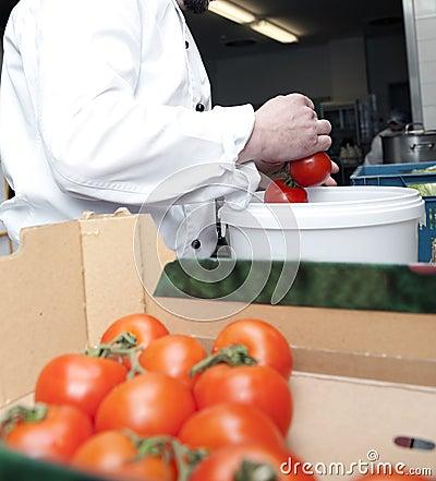 Wybiera pomidory
