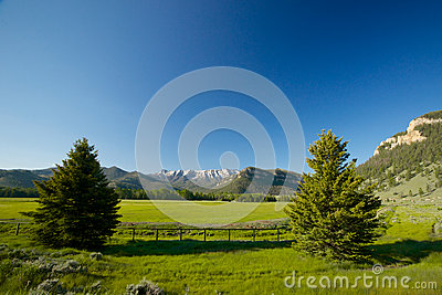 Wyoming Mountain Meadow