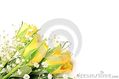 Kolor żółty róża i mgiełki trawa
