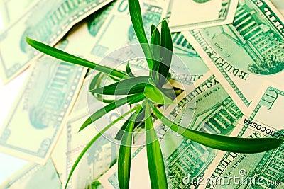 Wzrost w dolarowych wycena