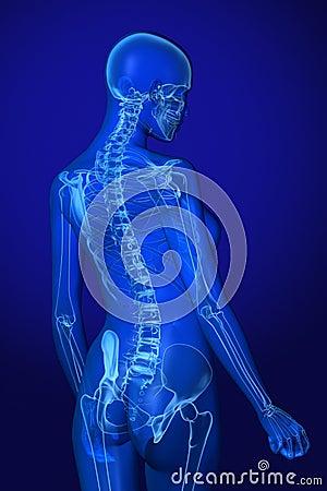 解剖学蓝色光芒x