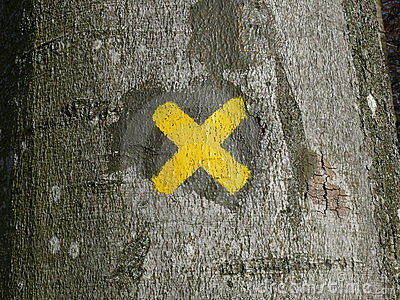 X Mark on a Tree