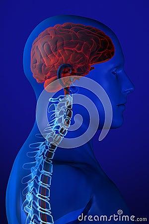 X-ray Anatomy on Blue