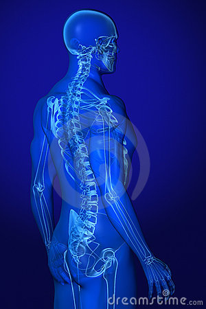 X-ray Anatomy on Blue