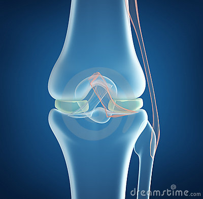 X-ray concept of knee joint closeup view