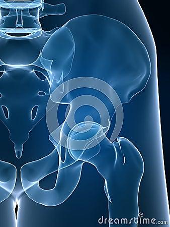 Free X-ray Hip Stock Photos - 4145313