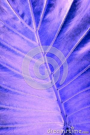 X-ray leaf