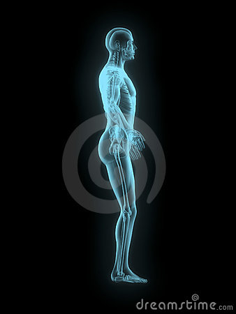 X-ray of man 3d side view blue