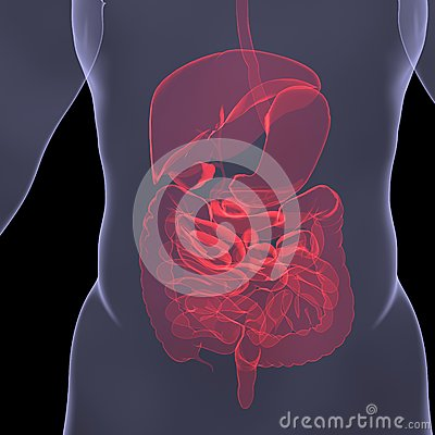 X-Ray picture of a person. Sore digestion