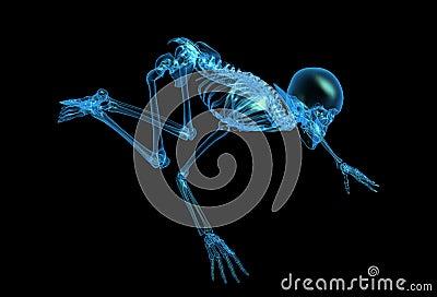 X-ray skeleton