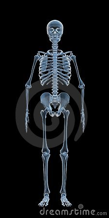 Free X-ray Skeleton Stock Photography - 15203882