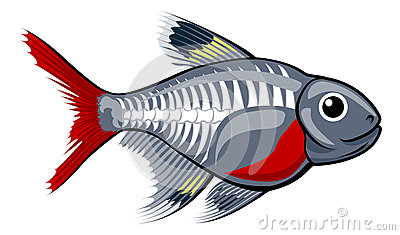 X-ray tetra cartoon fish