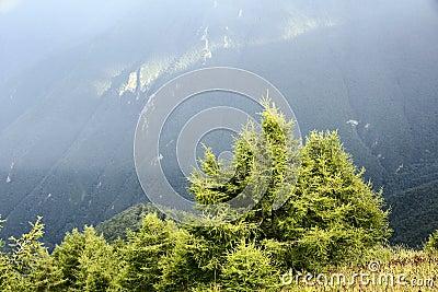 Xiaowutai Mountain scenery