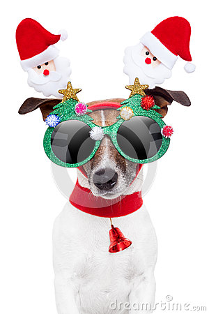 Free Xmas Dog Stock Photography - 26081542