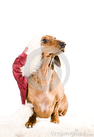Xmas dog isolated
