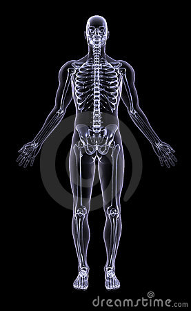 Xray - Full Figure Male