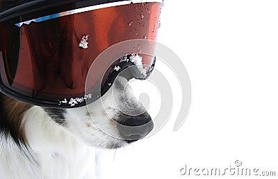 Xtreme Doggy Sports