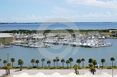 Yachts Marina Florida Palm Trees Tropical