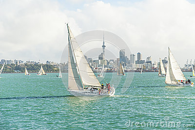 Yachts racing in auckland harbour