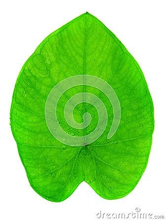 Yam leaf