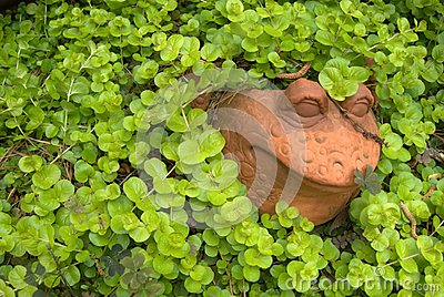 Yard Art Frog Vine Creeping Jenny
