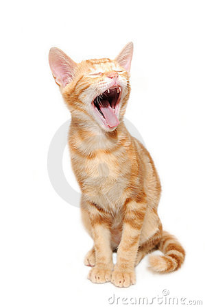 Free Yelling Orange Tabby Kitten Royalty Free Stock Image - 6322206