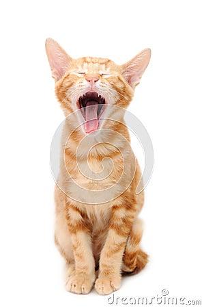 Free Yelling Orange Tabby Kitten Stock Images - 6685984