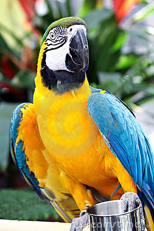 Free Yellow And Blue Parrot Stock Images - 18127134
