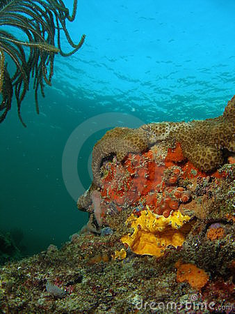 Free Yellow And Orange Coral Royalty Free Stock Image - 22701776